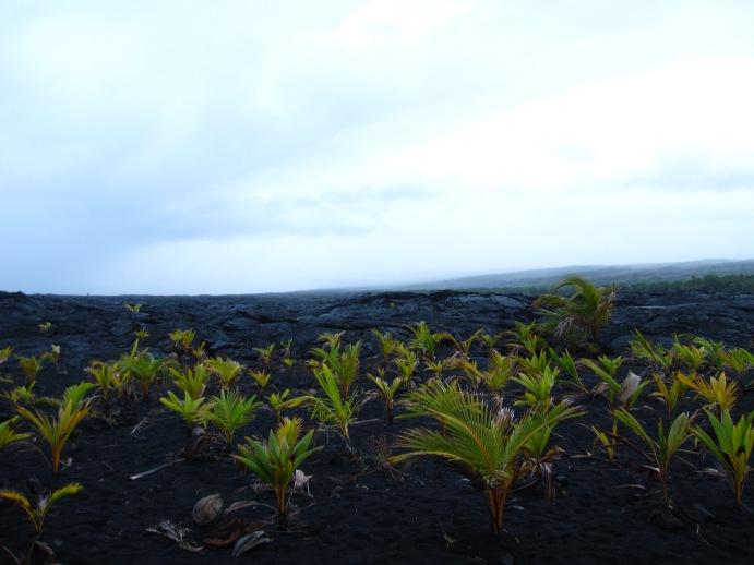 Hawaii2009 519